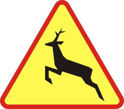 wypadek z udziałem dzikiej zwierzyny - odszkodowanie
